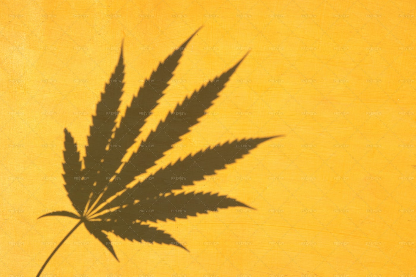 Marijuana Leaf Shadow: Stock Photos