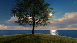 Tree On Hill Overlooking Ocean: Stock Motion Graphics