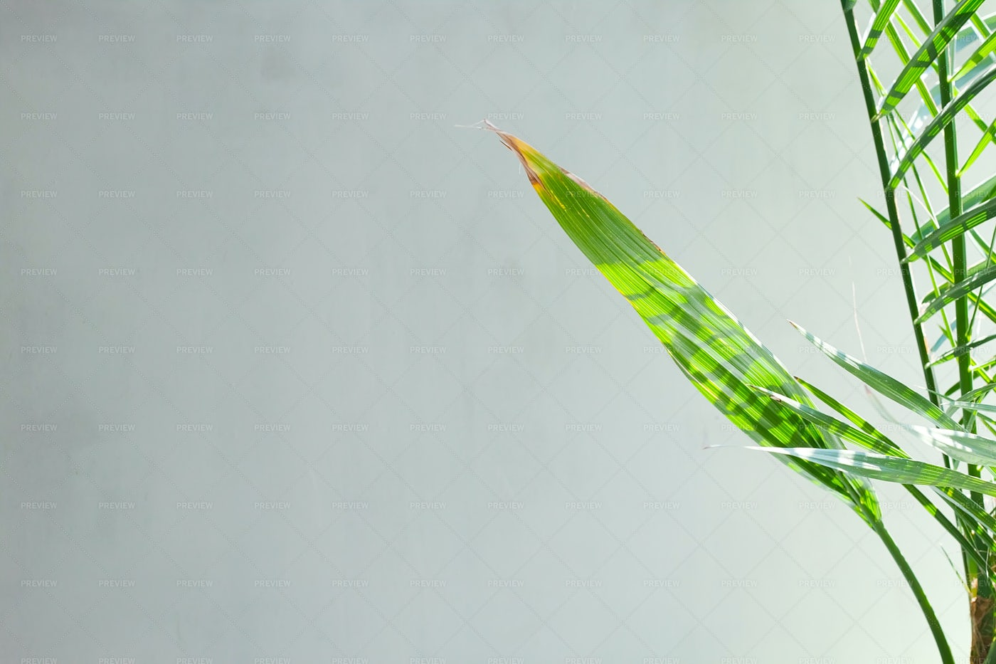 Palm Leaves: Stock Photos