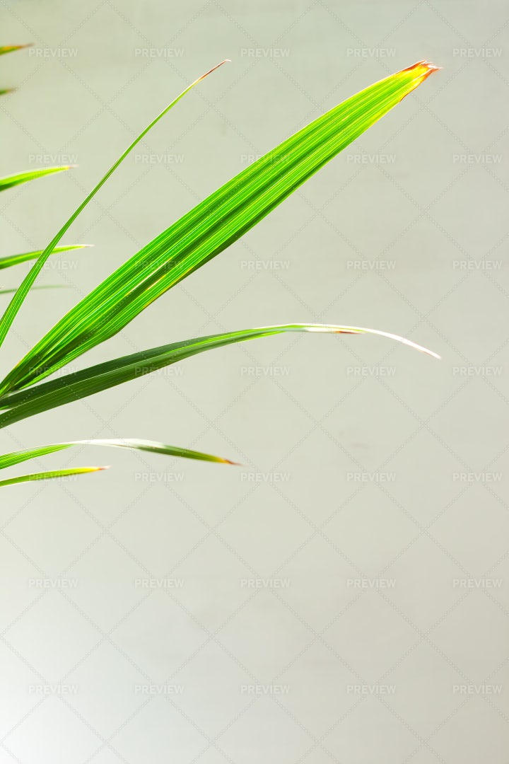 Palm Leaves Template: Stock Photos