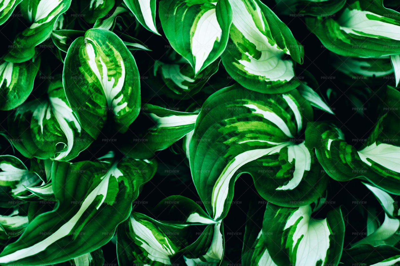 Green Leaves: Stock Photos