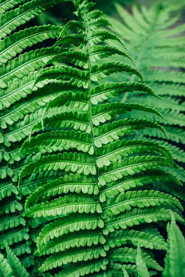 Fern Leaves: Stock Photos