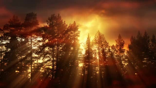 Clouds And Forest At Sunset: Stock Motion Graphics