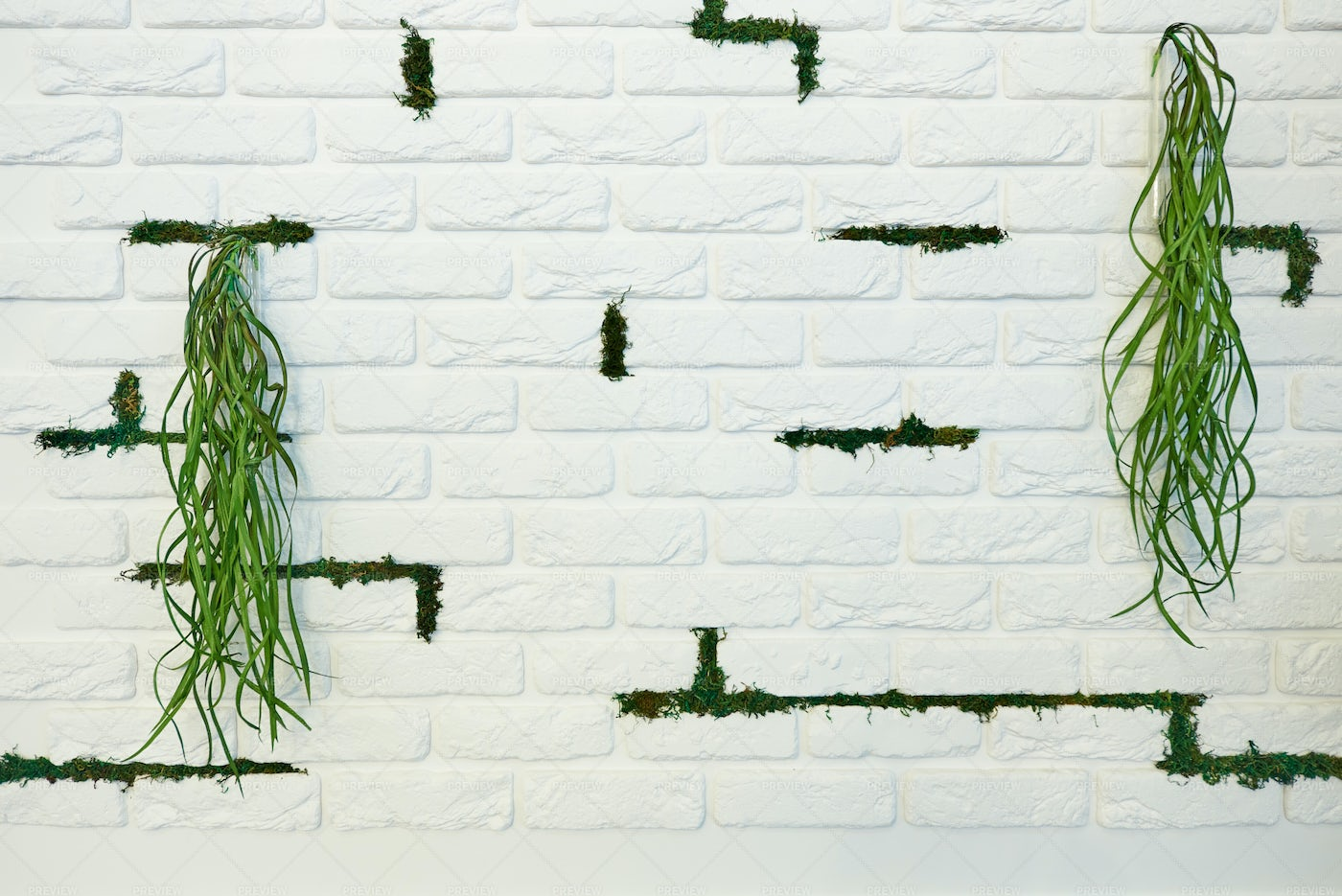 Wall With Greenery: Stock Photos