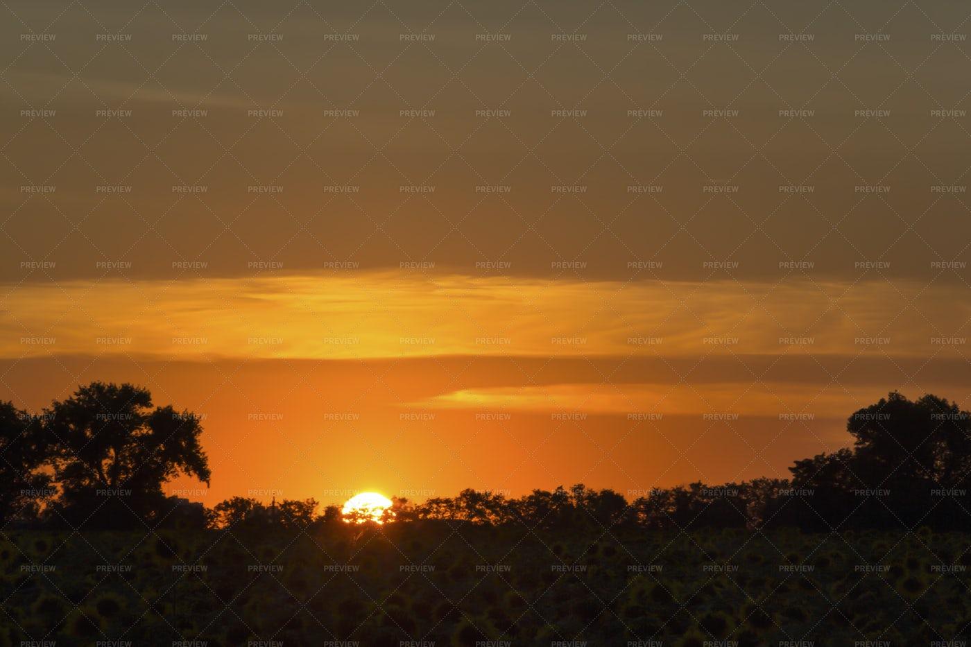 Orange Sunset Over Sunflower Field: Stock Photos