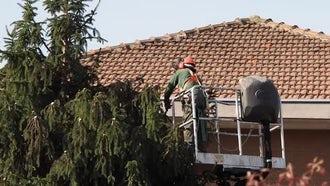 Man Pruning Tree: Stock Video