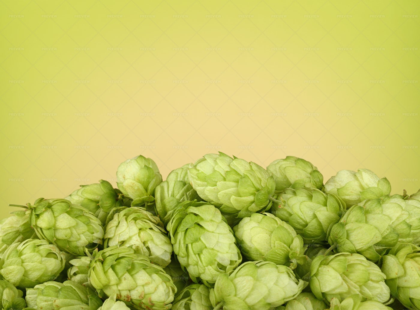 Green Hops Background: Stock Photos