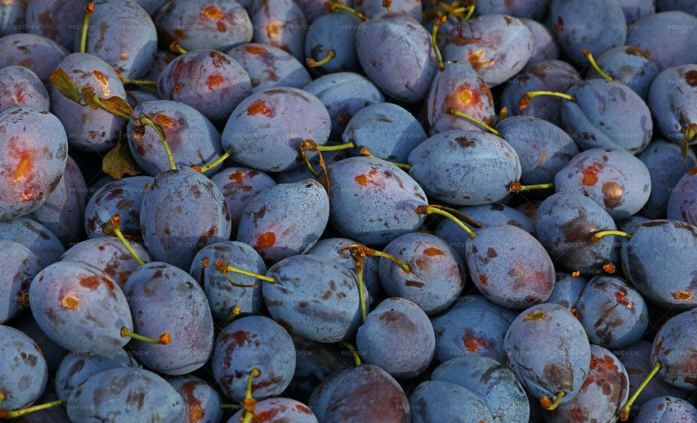 Fresh Ripe Blue Plums: Stock Photos