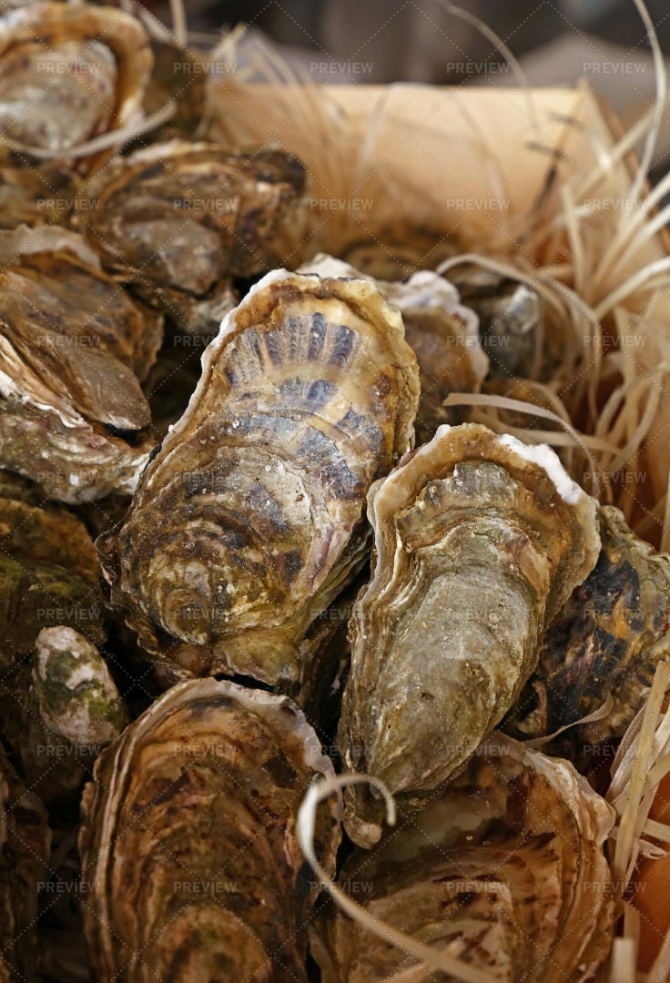 Fresh Catch Of Oysters: Stock Photos