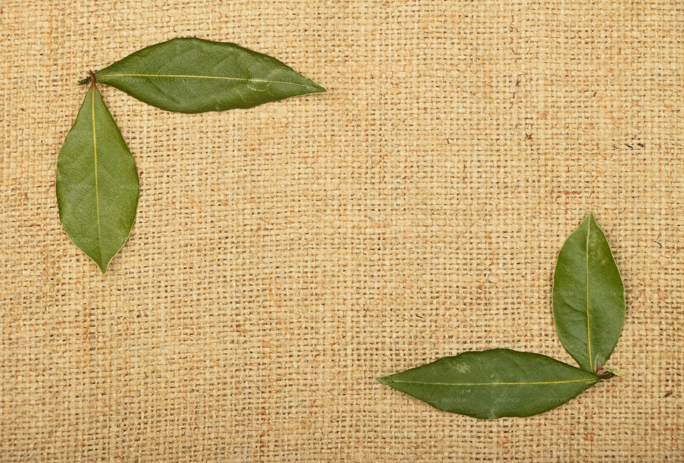 Bay Leaves On Canvas: Stock Photos
