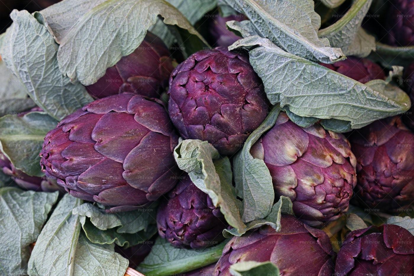 Purple Globe Artichokes: Stock Photos