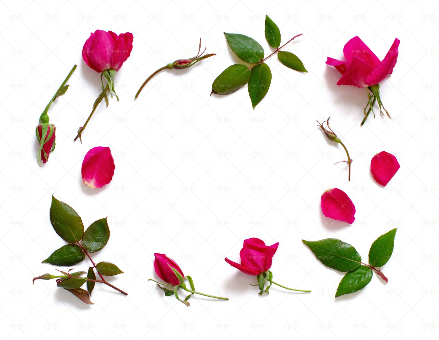 Rose Frame: Stock Photos