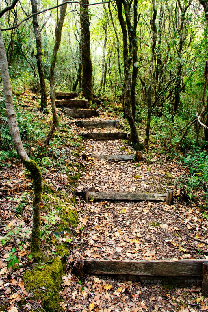 Lush Forest Pathway: Stock Photos