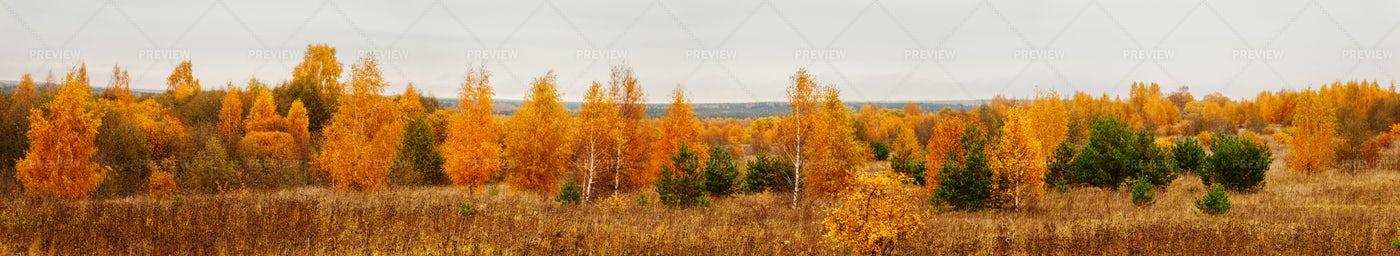 Autumn Forest Panorama: Stock Photos