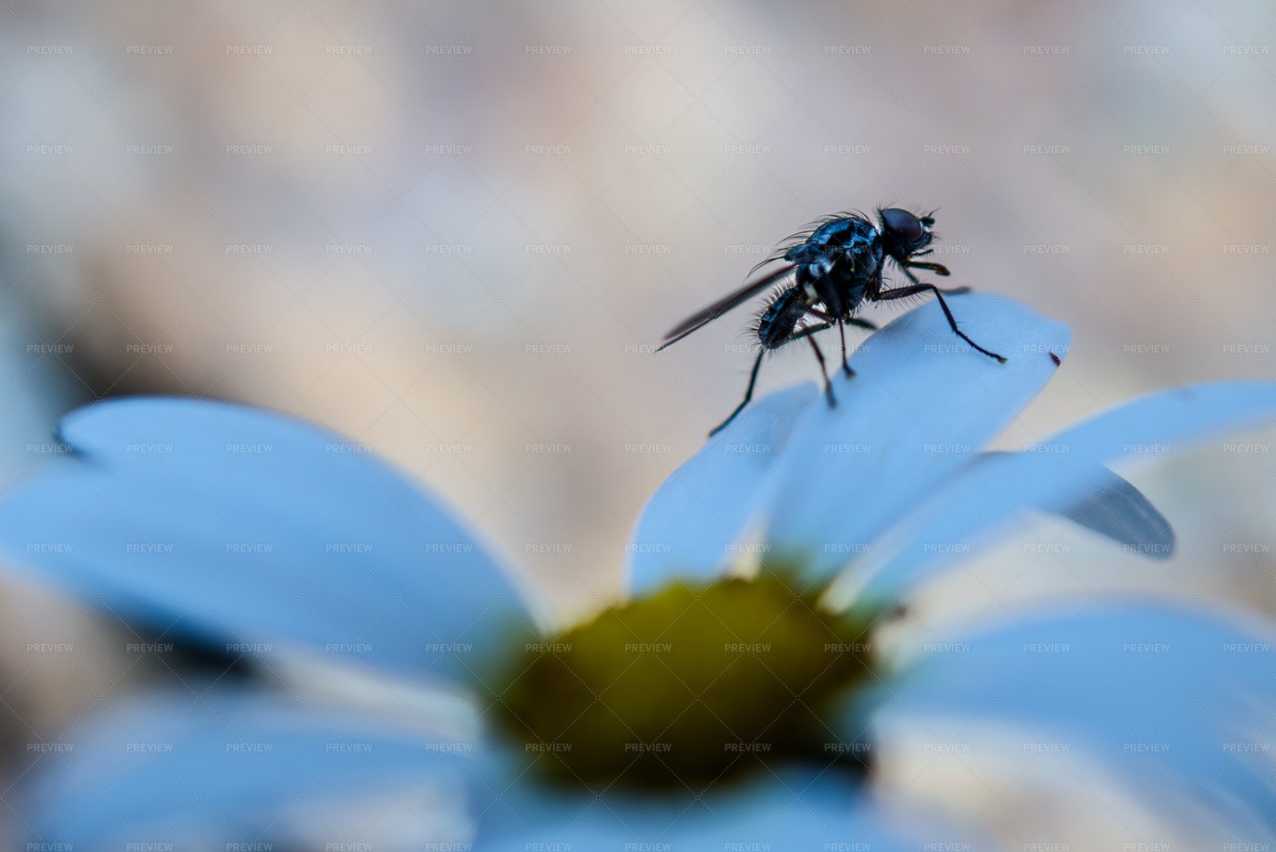 A Fly In Nature: Stock Photos