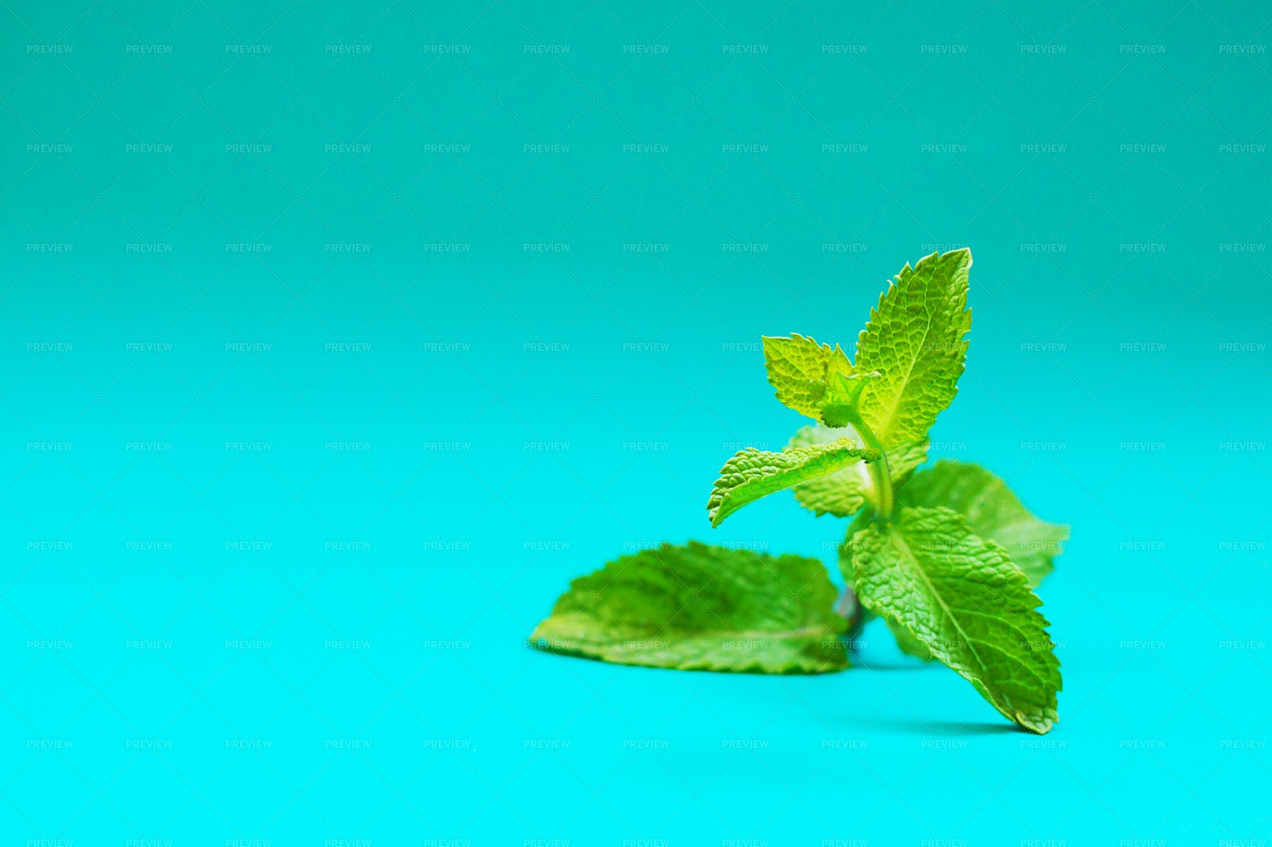Fresh Mint: Stock Photos