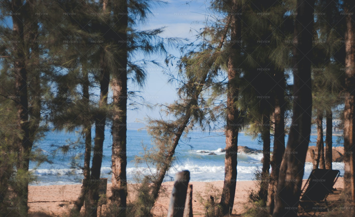 Trees On The Beach: Stock Photos