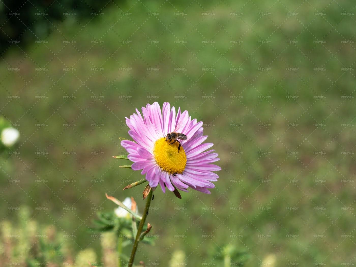 Bee On A Flower: Stock Photos