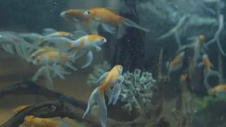Fish In An Aquarium: Stock Video