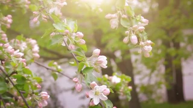 Flower Garden Blossoming In Spring: Stock Video