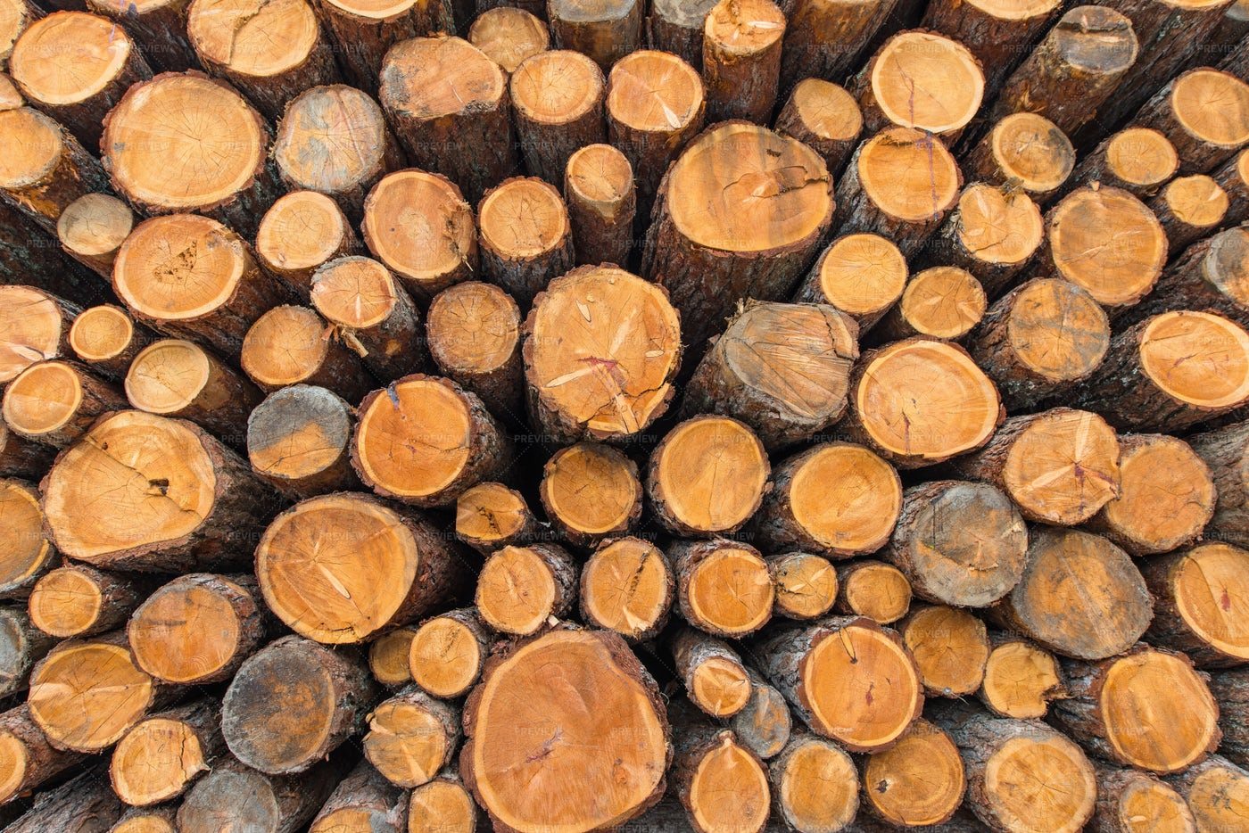 Stacked Wood Logs: Stock Photos