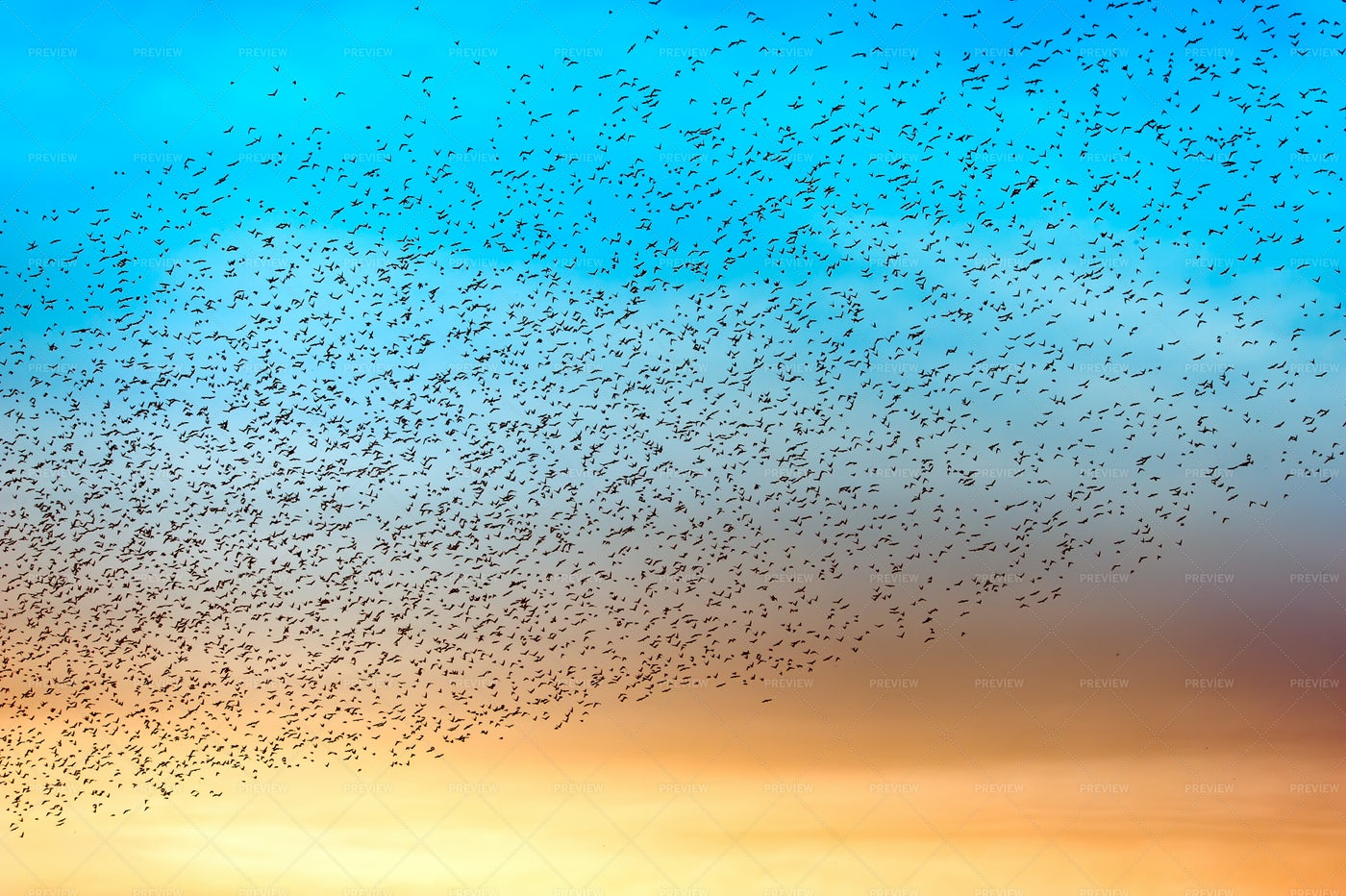 Flock Of Many Birds: Stock Photos