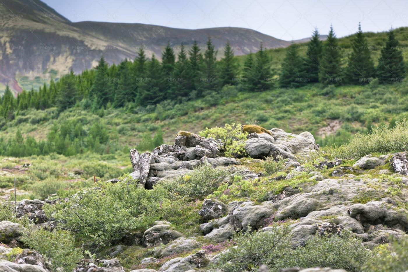 Wild Nordic Landscape: Stock Photos