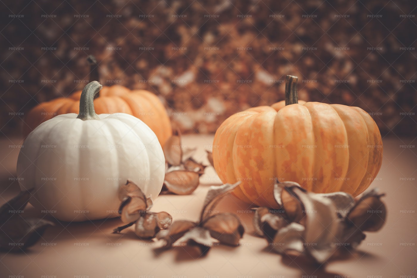 Orange And White Pumpkins: Stock Photos