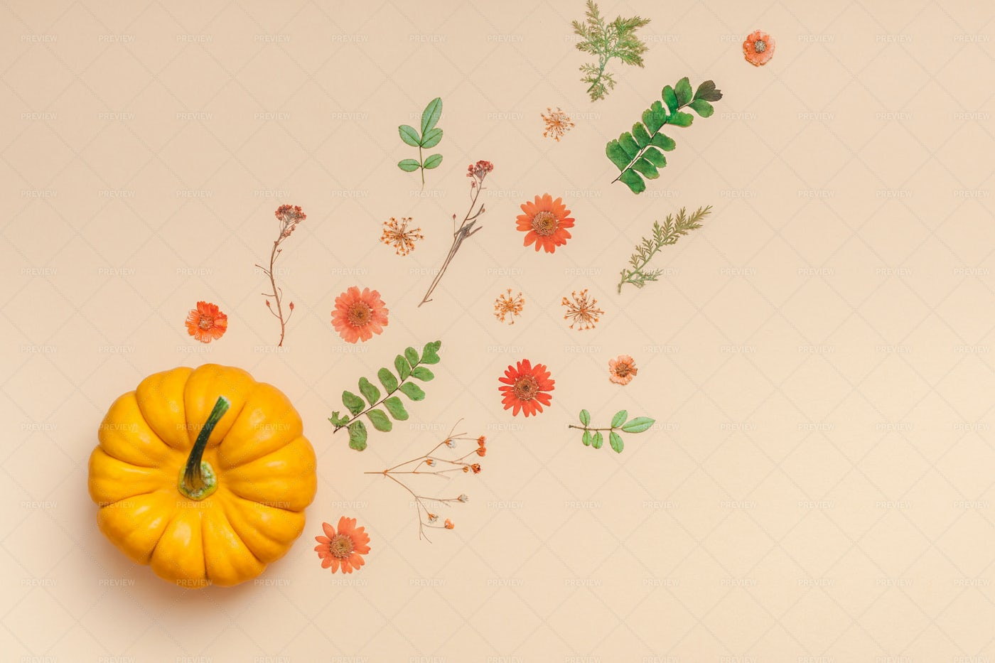Pumpkin And Dry Flowers: Stock Photos