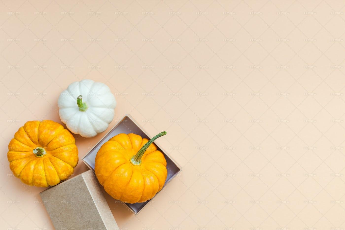 Small Colorful Pumpkins: Stock Photos