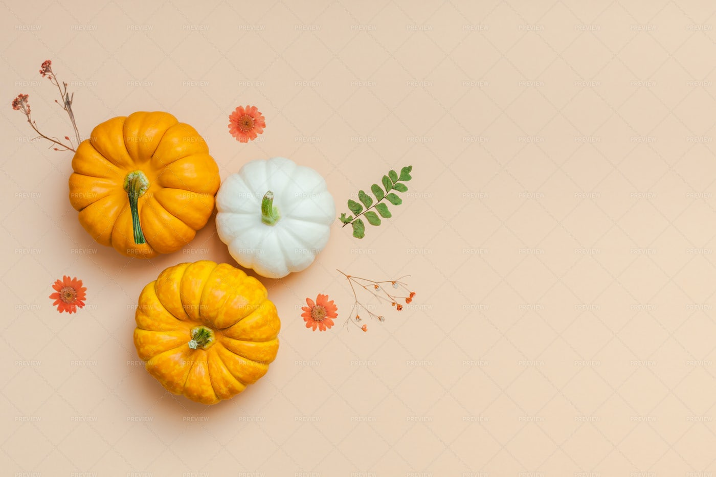 Pumpkins And Dried Flowers: Stock Photos