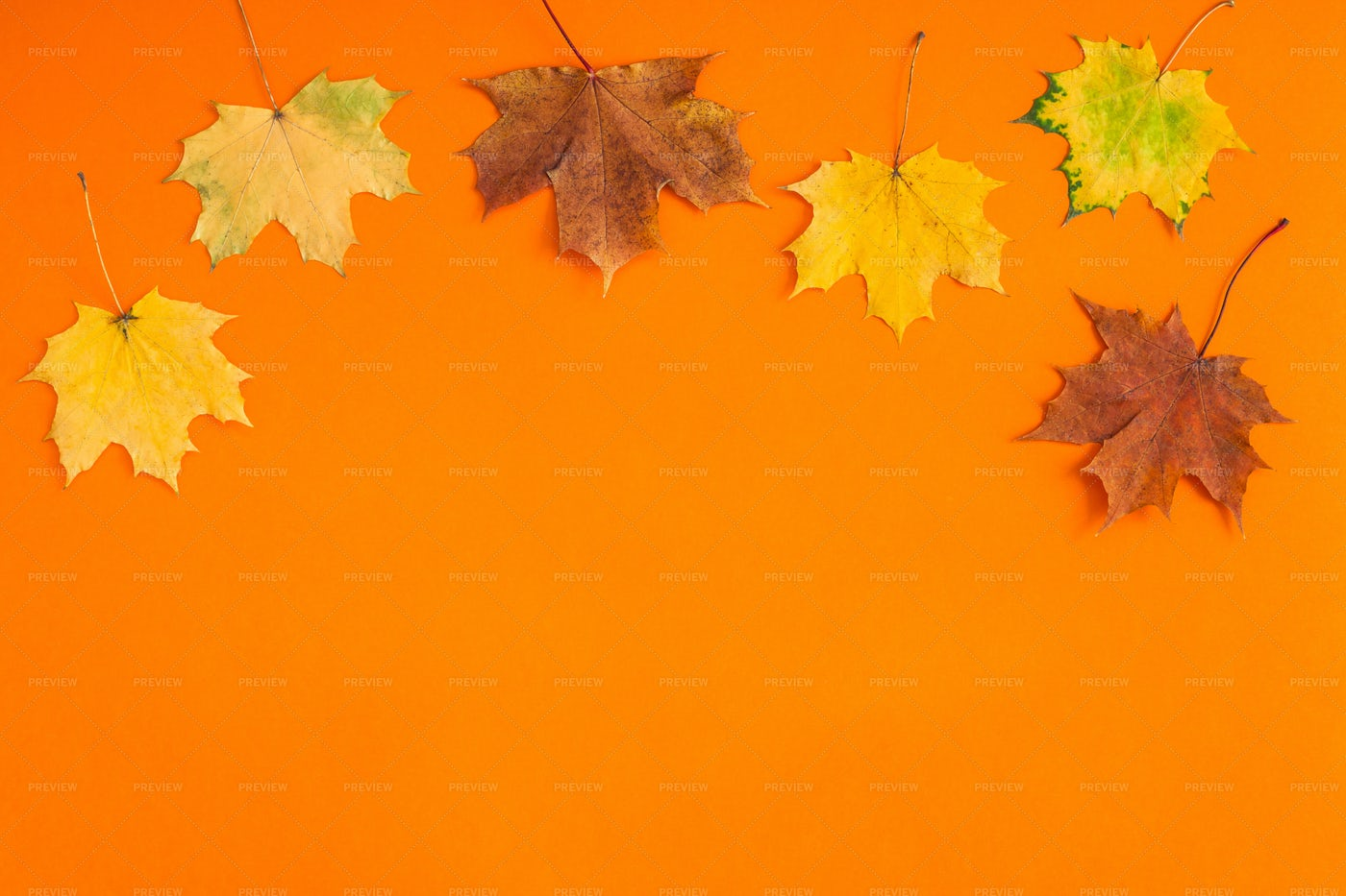 Autumn Leaves On Orange: Stock Photos