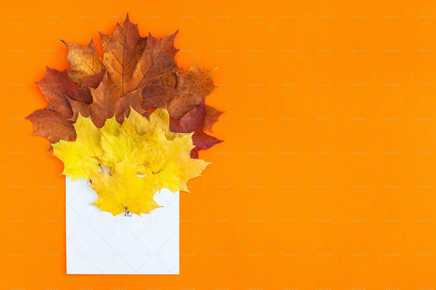 Autumn Leaves In Envelope: Stock Photos