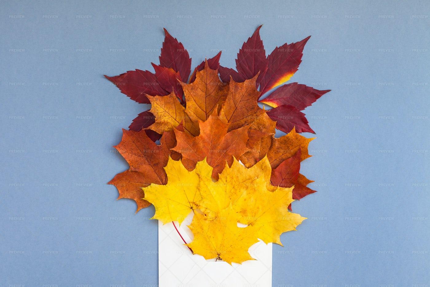 Autumn Leaves: Stock Photos