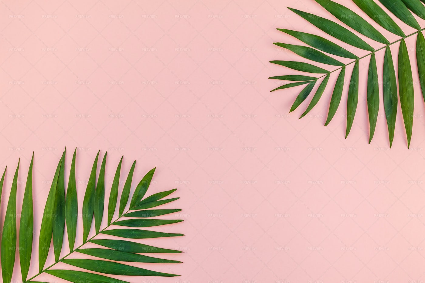 Tropical Leaves On Pink: Stock Photos