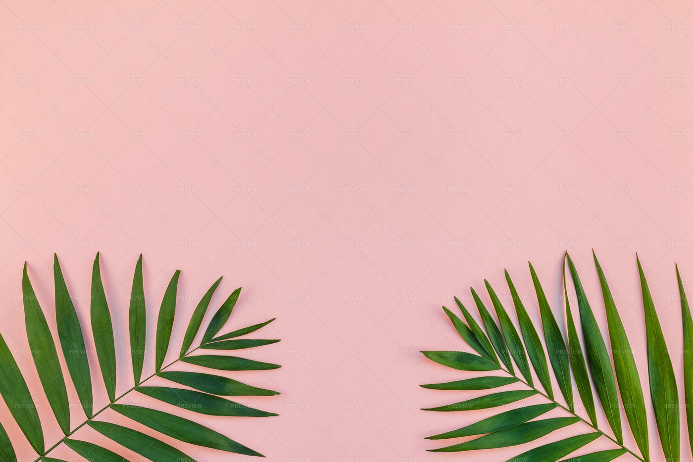Pink Surface And Leaves: Stock Photos
