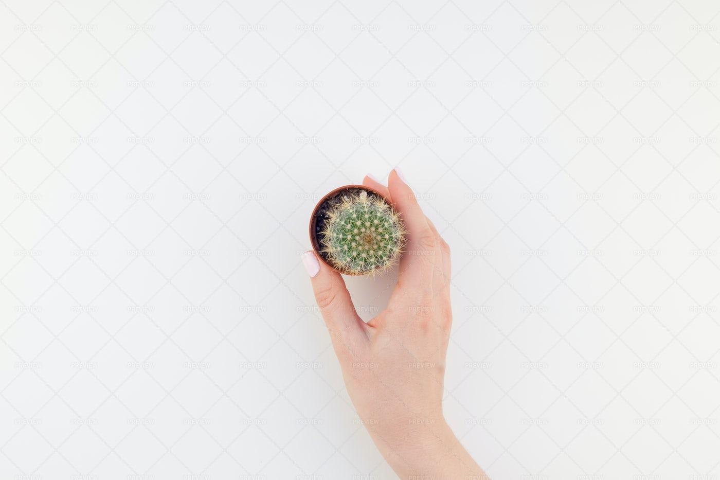 Hand Holding Cactus: Stock Photos