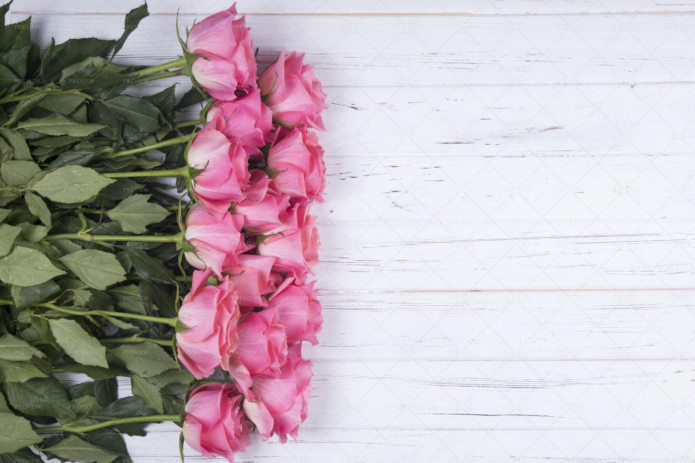 Pink Rose Flowers: Stock Photos