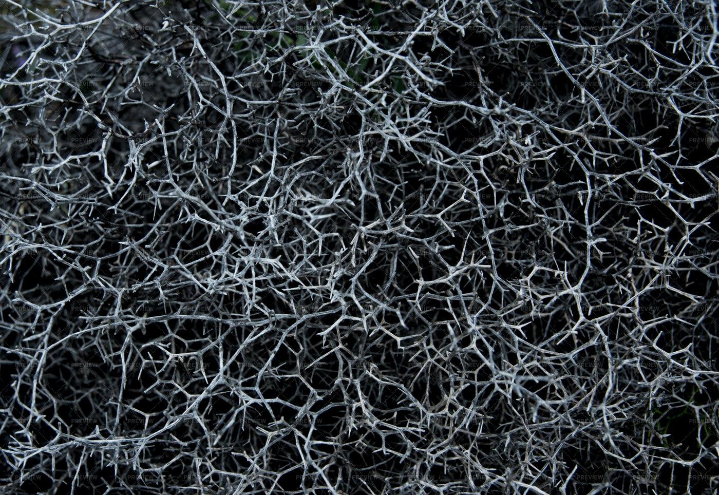 Dark Dry Branches Texture: Stock Photos