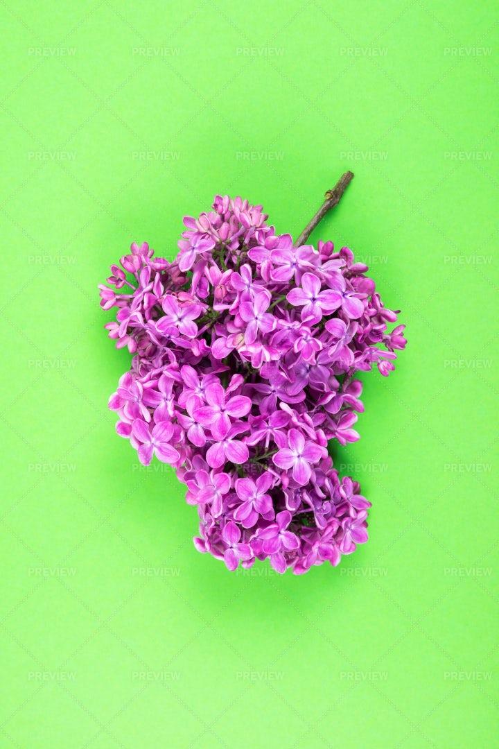 Branch Of Lilac: Stock Photos