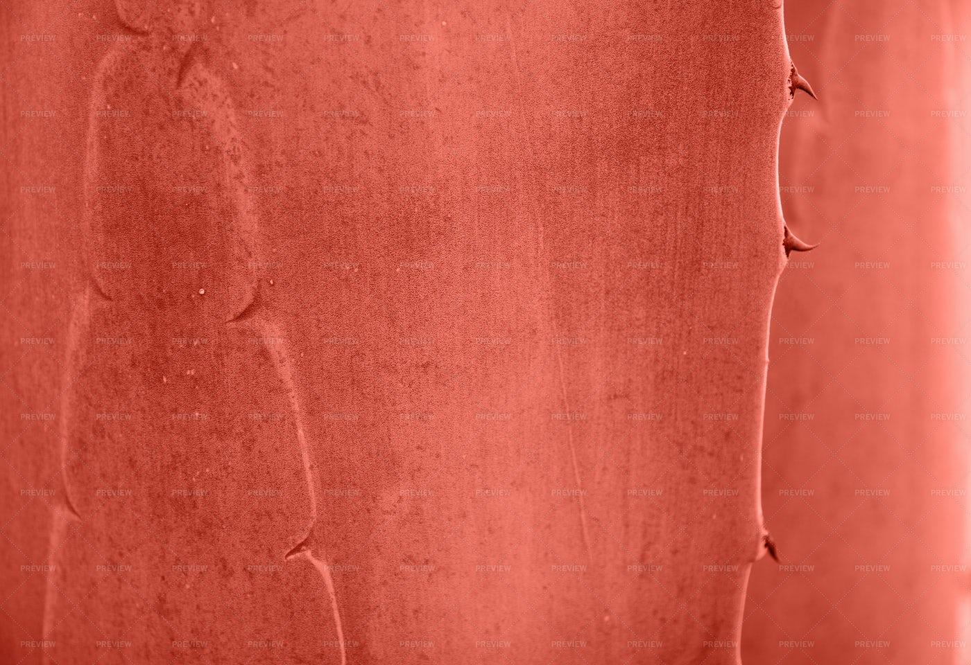 Red Aloe Surface: Stock Photos
