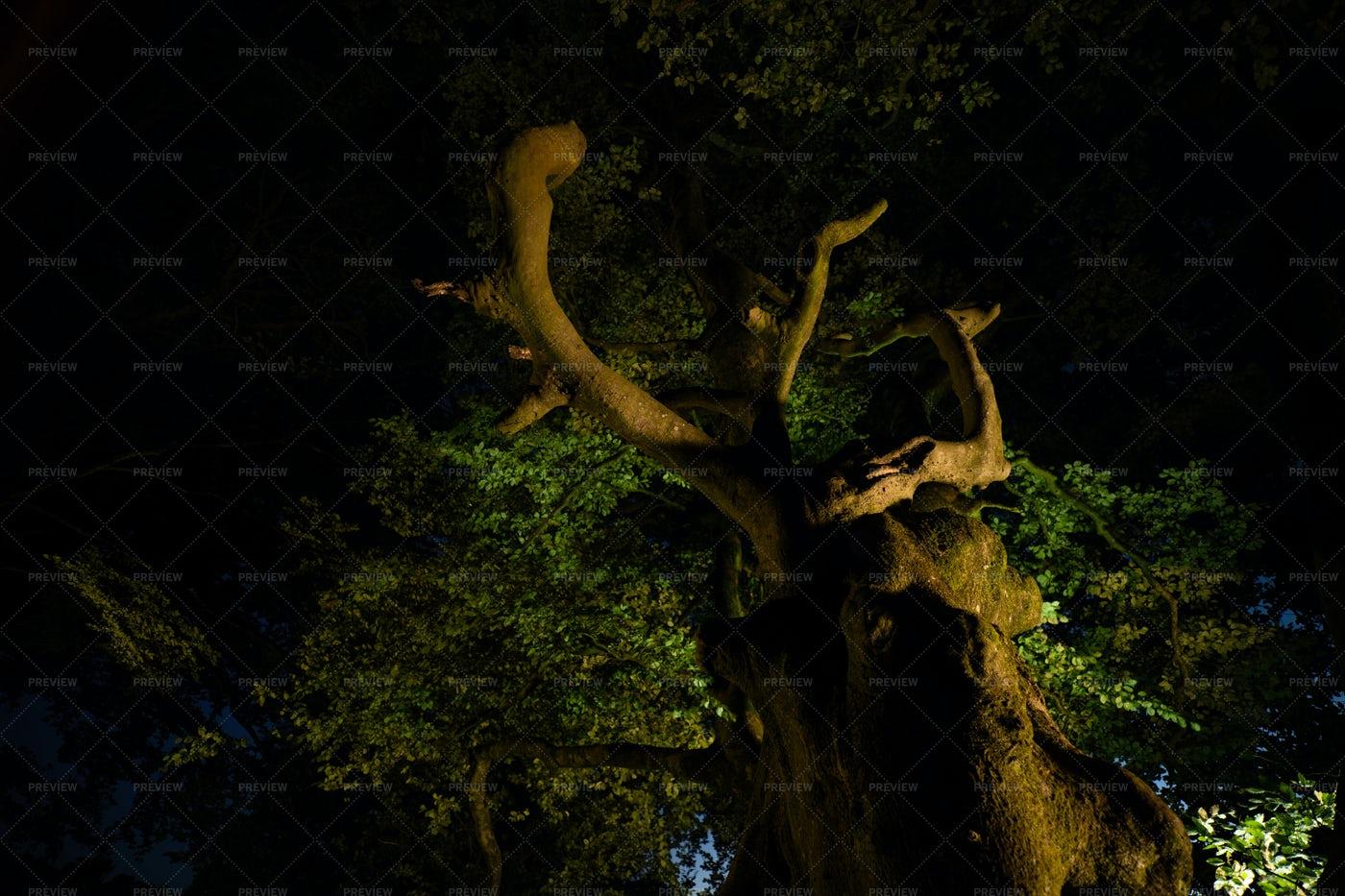 Tree In The Dark: Stock Photos