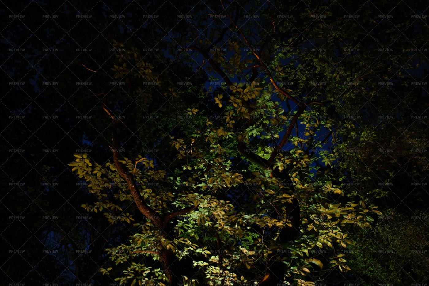 An Illuminated Tree: Stock Photos