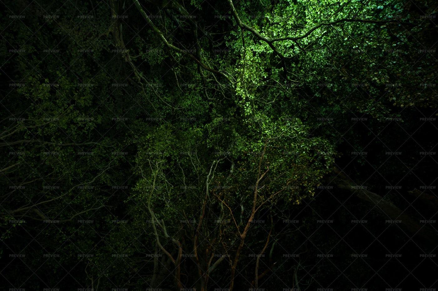 Illuminated Tree Brances: Stock Photos