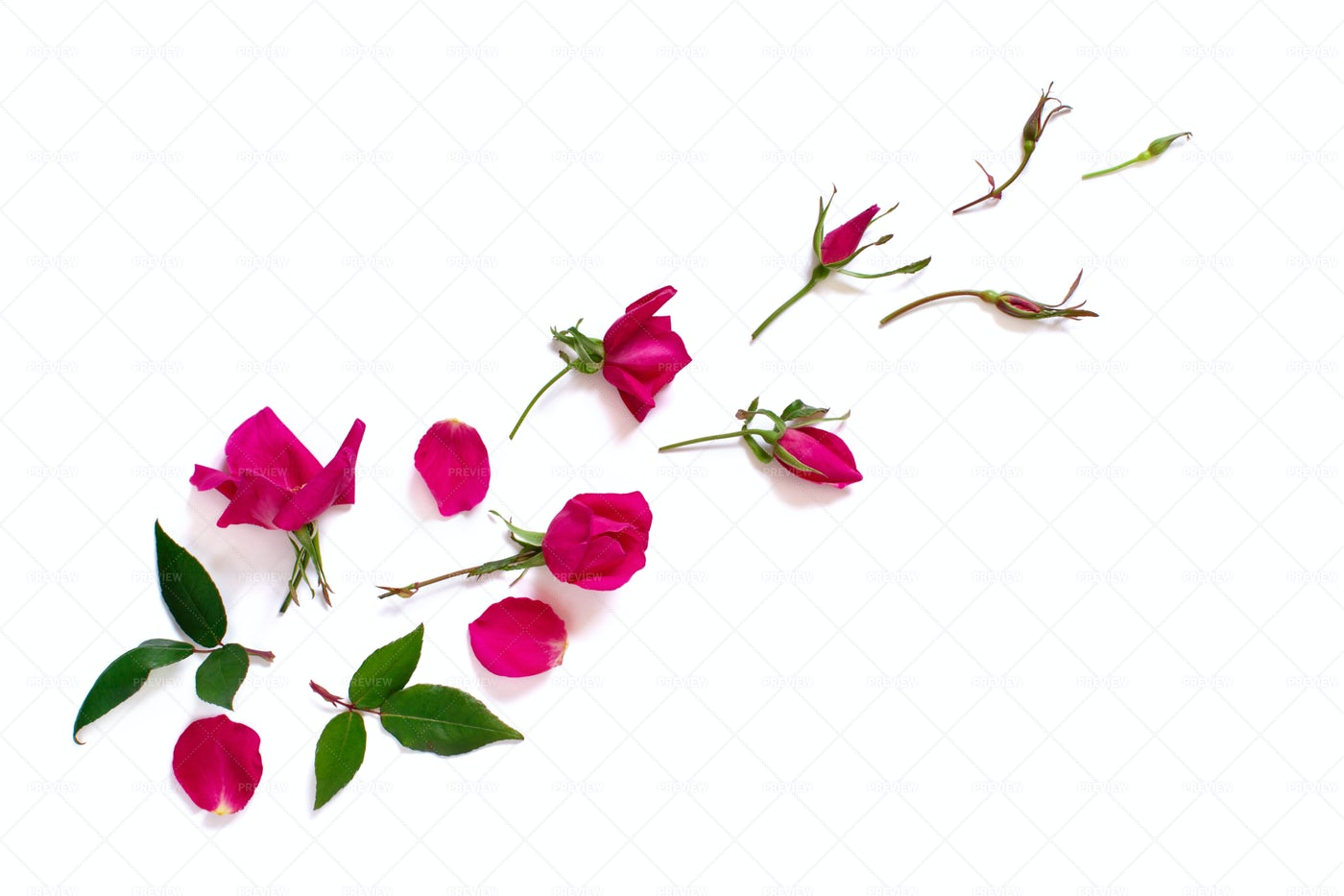 Spring Composition With Pink Roses: Stock Photos