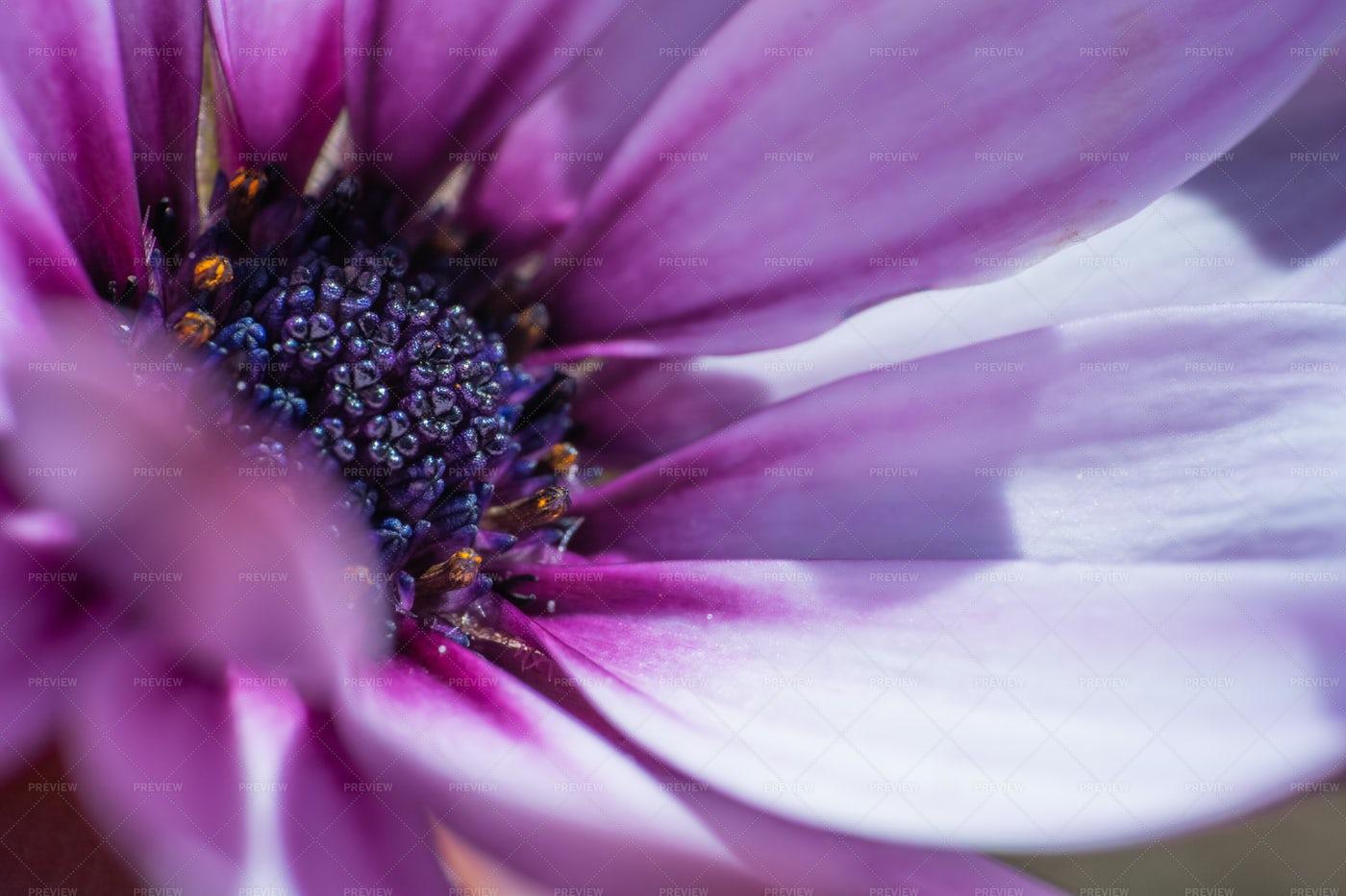 Purple Flower Macro: Stock Photos