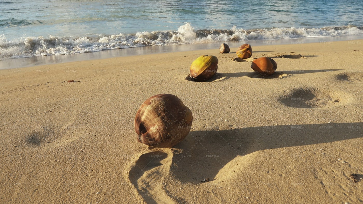 Coconuts On The Sand: Stock Photos
