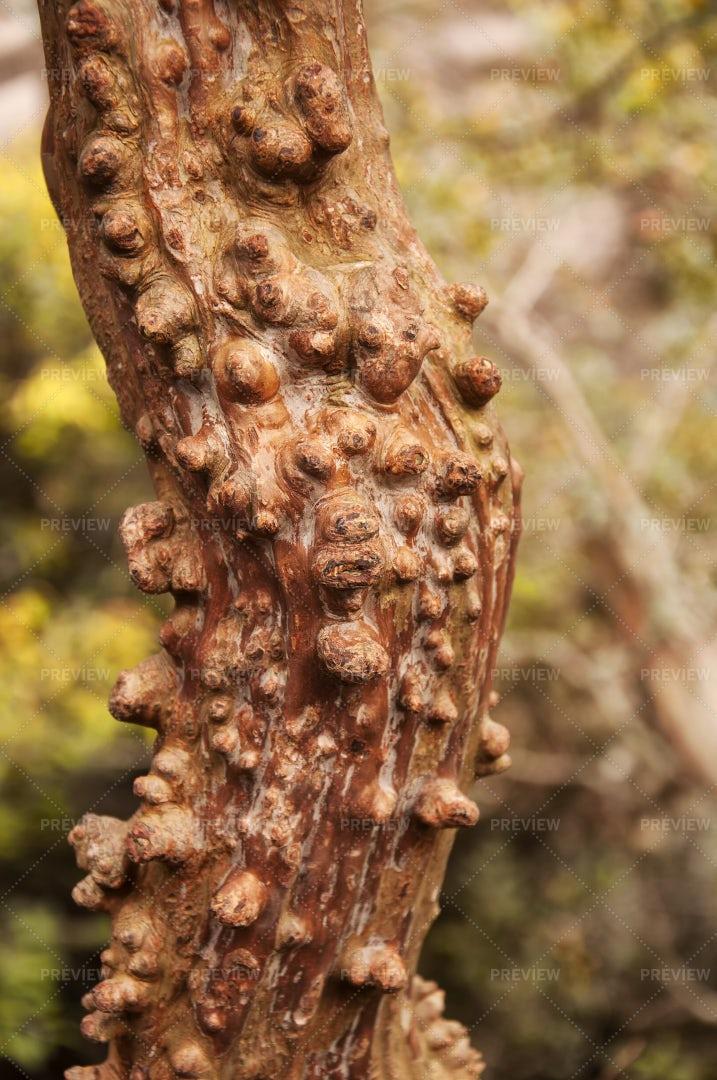 Tree Bark In China: Stock Photos