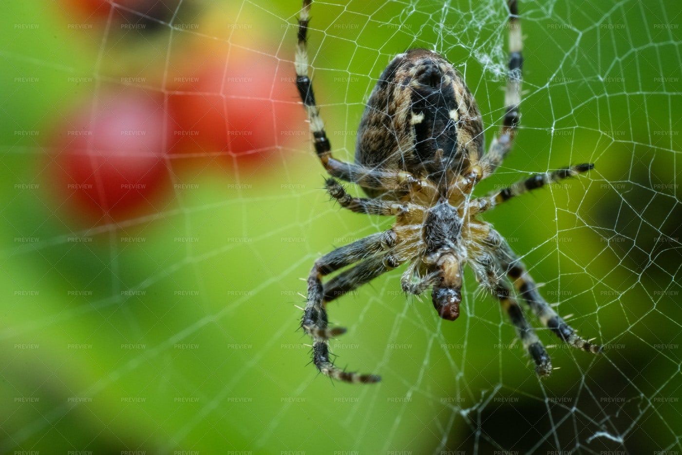 Spider Sat In A Web: Stock Photos