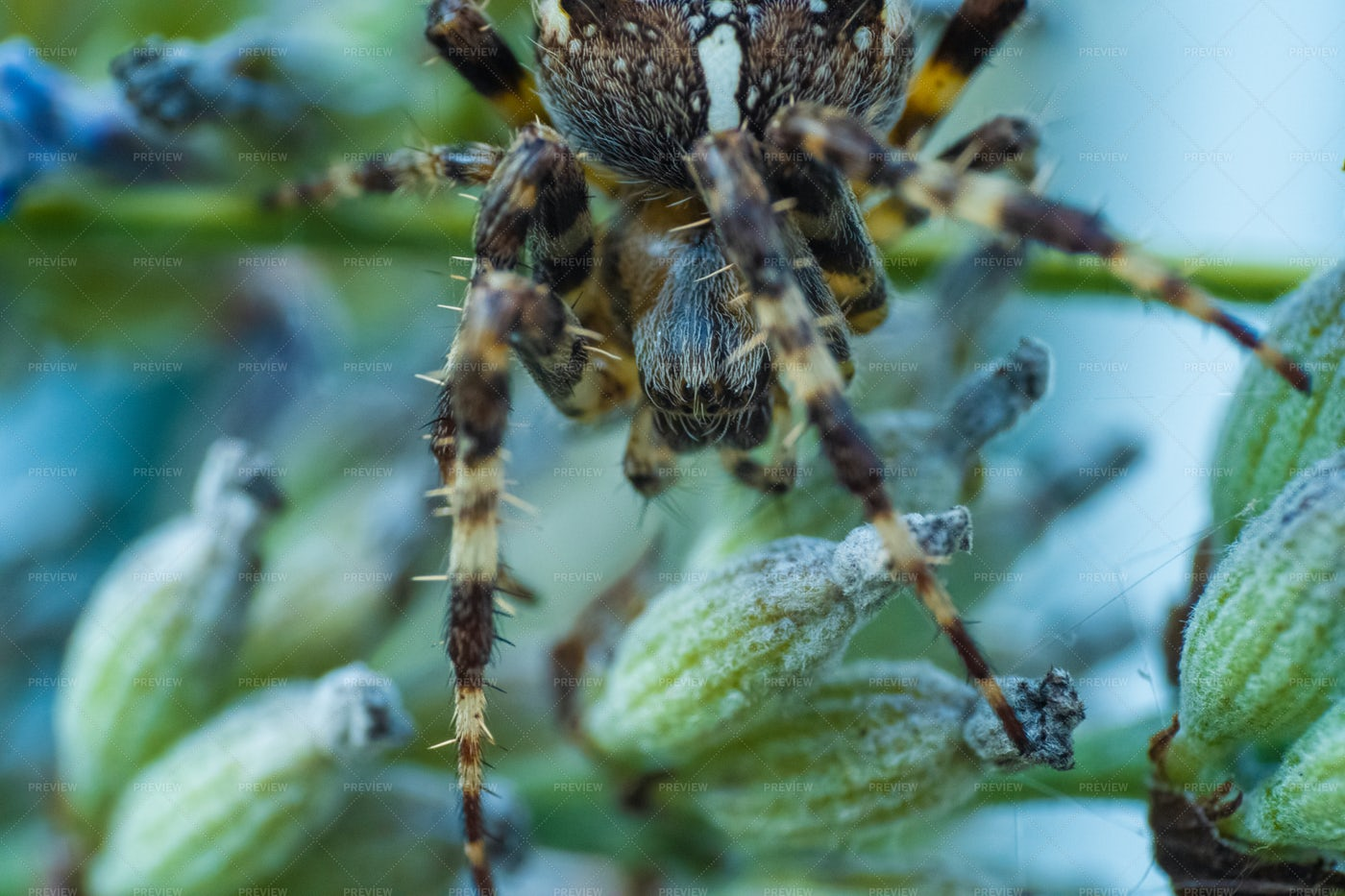 Spider On A Plant: Stock Photos